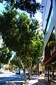 Shops and buildings Makariou Avenue in Nicosia Republic of Cyprus.jpg