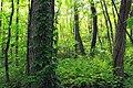 Short Hike (6) (19823491383).jpg
