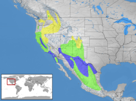 Sialia mexicana distribution.png