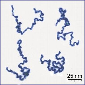 Forensic polymer engineering - Image: Single Polymer Chains AFM