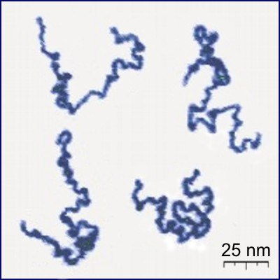 Single Polymer Chains AFM
