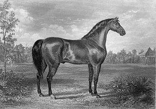 Sir Archy 19th-century American Thoroughbred stallion