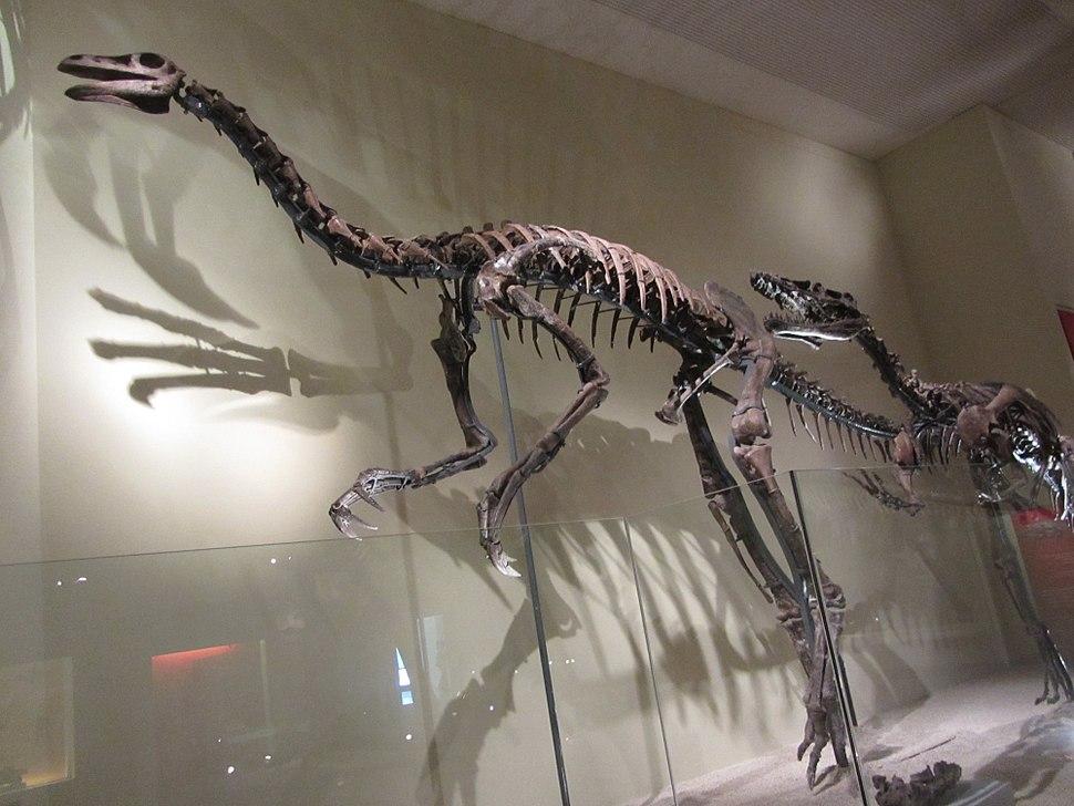 Skeleton of Beishanlong grandis