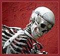 Skull - Flickr - Stiller Beobachter (1).jpg