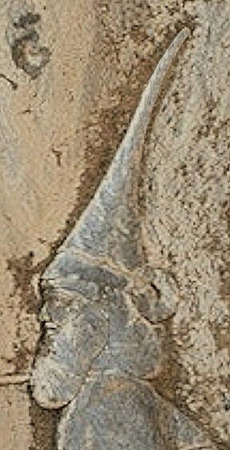 Skunkha - Portrait of Skunhka. 520–519 BC.