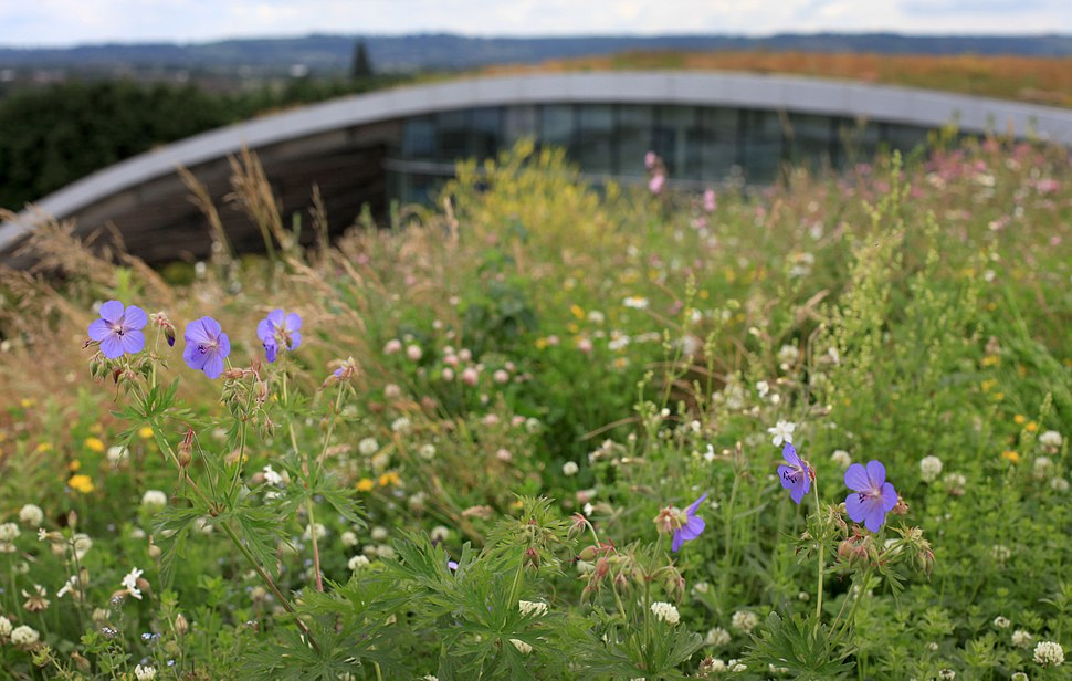 Sky Garden Kanes Foods Green Roof