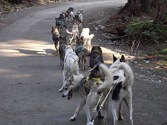 Sled Dog Discovery & Musher's Camp 7.jpg