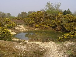 Small pond on the heath, north of Pilley Bailey, New Forest - geograph.org.uk - 408444.jpg