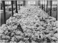 Small portions of the Christmas mail that is being sorted at Pier 86, North River, New York City, for the American... - NARA - 530767.tif