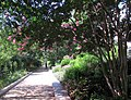 Smithsonian Gardens in July (19467136123).jpg