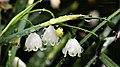 Snowflakes - Flickr - alden0249.jpg