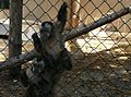 Sofia Zoo E991.jpg