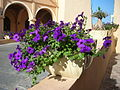 Some Flowers (5299893960).jpg