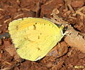 Some Kind of Sulfur (2839078315).jpg