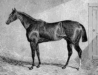 Spaniel (horse) - Spaniel. Contemporary engraving.