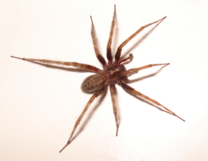 Spider-2007-10-09.png