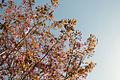 Spring (5606256055).jpg