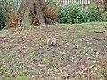 Squirrel in the Derby Arboretum - geograph.org.uk - 1101324.jpg