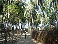 St Martin Island Coconut Trees.JPG
