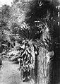 Staghorn ferns from A. Archer's garden, Brisbane, ca. 1876 (6942945537).jpg