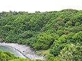Starr-090617-0955-Mangifera indica-habit and shoreline-Kakipi Gulch Haiku-Maui (24847216022).jpg