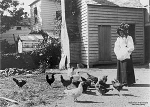 English: Feeding the poultry in the backyard a...