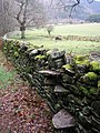 Stile built into the Drystane Dyke - geograph.org.uk - 759440.jpg