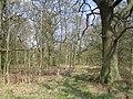 Stowe, Woodland near Charmandean School - geograph.org.uk - 152825.jpg