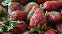 దస్త్రం:Strawberries time-lapse.ogv