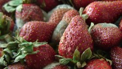 Archivo:Strawberries time-lapse.ogv