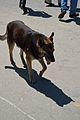 Street Dog - Shimla 2014-05-08 1491.JPG