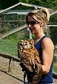 Strix aluco -British Wildlife Centre, Surrey, England -zoo keeper-8a.jpg