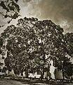 Surreal Tree (5858530630).jpg