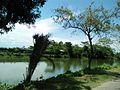 Sylhet ponds.jpg