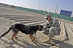 TF Dolch mine dog teams get ready for action DVIDS354208.jpg