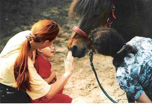 equine facilitated psychotherapy EFP