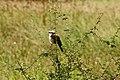 Tarangire 2012 05 27 1942 (7468507092).jpg