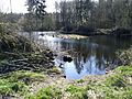 Teich im Wald 2 - panoramio.jpg