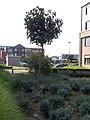 Ternat Meersstraat Zomerlinde - 209069 - onroerenderfgoed.jpg