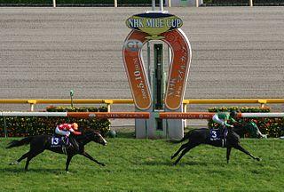 NHK Mile Cup