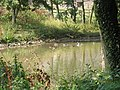 The Duck Pond, Pegglesworth Home Farm - geograph.org.uk - 48384.jpg