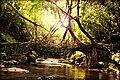 The Living Root Bridges Of Cherrapunji In Megahalya, India.jpg