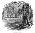 The New Forest its history and its scenery - page 172.png