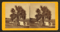 The Palmetto, from Robert N. Dennis collection of stereoscopic views.png