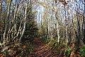 The Wealdway, Hurst Wood - geograph.org.uk - 1571686.jpg