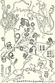 The actinomycetes (1961) (16152632663).jpg
