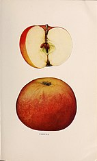 The apples of New York (1905) (19559358679).jpg