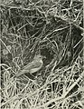 The birds of Britain - their distribution and habits (1916) (14568732119).jpg