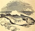 The common objects of the sea shore - including hints for an aquarium (1859) (20480506608).jpg