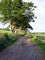 The road to Fardens Farm (geograph 5802403).jpg